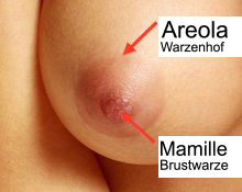 KroMED Hamburg | Was ist die Mamille, was ist die Areola? Medizinisch indizierte Brustpigmentierung